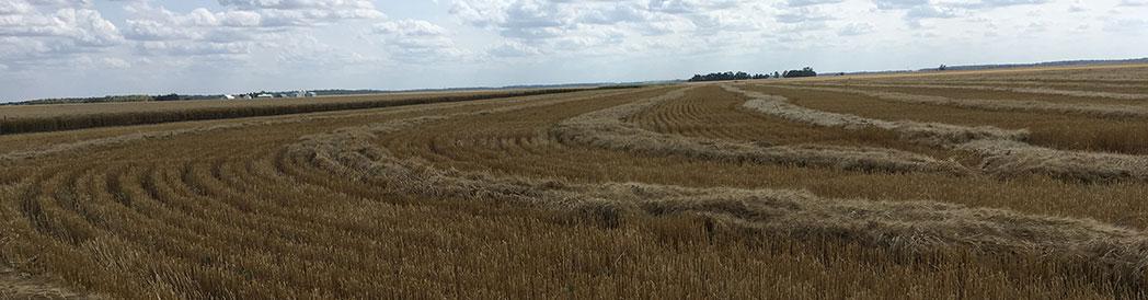 Anne's Field